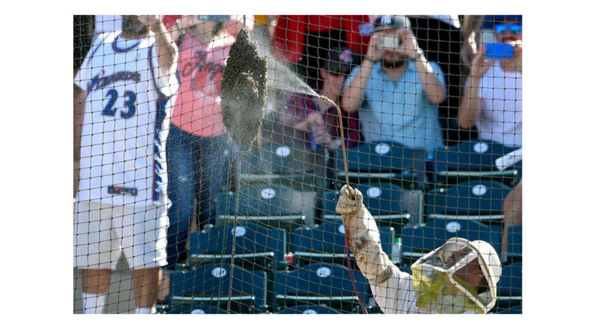 MLB-beekeeper.jpg